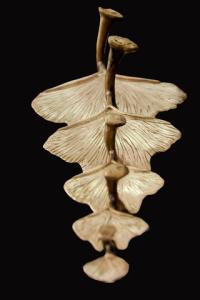 ginkgo-feuilles